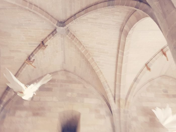 Stone Stein Old White Weiss Flying Like A Bird Bird EyeEm Selects Arch No People Indoors  Day Architecture Close-up