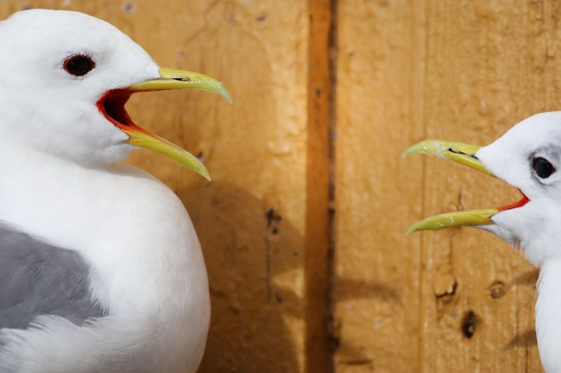 Close-up of swan perching on wood