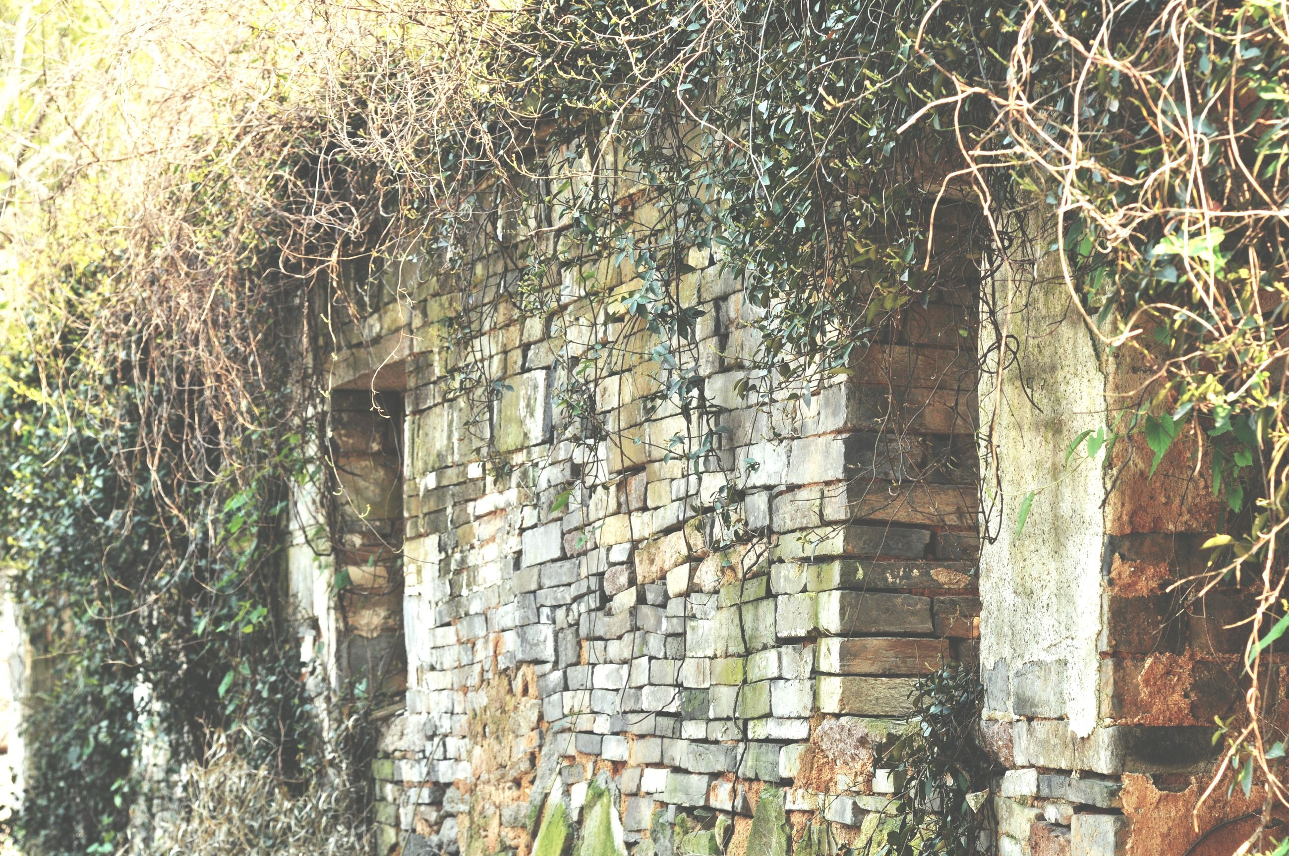 architecture, built structure, building exterior, wall - building feature, window, ivy, tree, brick wall, old, growth, house, full frame, wall, weathered, plant, day, backgrounds, no people, outdoors, building
