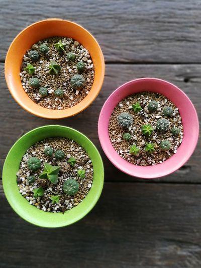 Cactus in