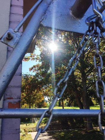 Sunshine EyeEm Best Shots - Nature EyeEmBestPics EyeEm Nature Lover Sunlight Nature Day No People Plant Lens Flare Sunbeam Architecture Metal Built Structure Fence Outdoors Boundary Barrier Streaming Low Angle View Sun Safety Tree Growth