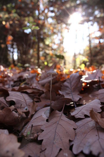 Leafs Autmun Colors Close-up Day Fallen Maple Leaf Mushroom Outdoors Princess Of The Forest