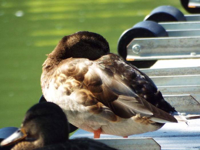 Close-up of birds perching