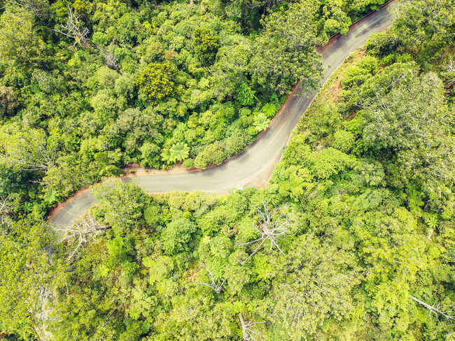 Stunning aerial drone view of a windy road (route 12) leading through Waipoua Kauri Forest in the western part of the North Island of New Zealand. The Kauri Forest is a popular tourist destination. Kauri Kauri Tree Loneliness Nature New Zealand Beauty New Zealand Scenery Windy Road Aerial View Beauty In Nature Dji Dji Spark Drone View Forest Forest Road High Angle View Nature Nature_collection New Zealand Rain Forest Scenics Tranquil Scene Tree Waipoua Winding Road