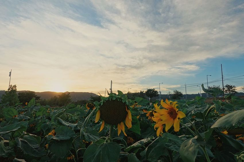 Taking Photos Landscape Nature Fall Beauty Clouds And Sky EyeEm Nature Lover Sony Rx100m4 Flowers Sunset