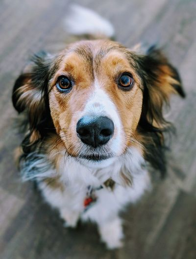 English Shepherds Dog Expression EyeEm Selects Pets Portrait Dog Looking At Camera Protruding Close-up Snout Animal Face Animal Nose