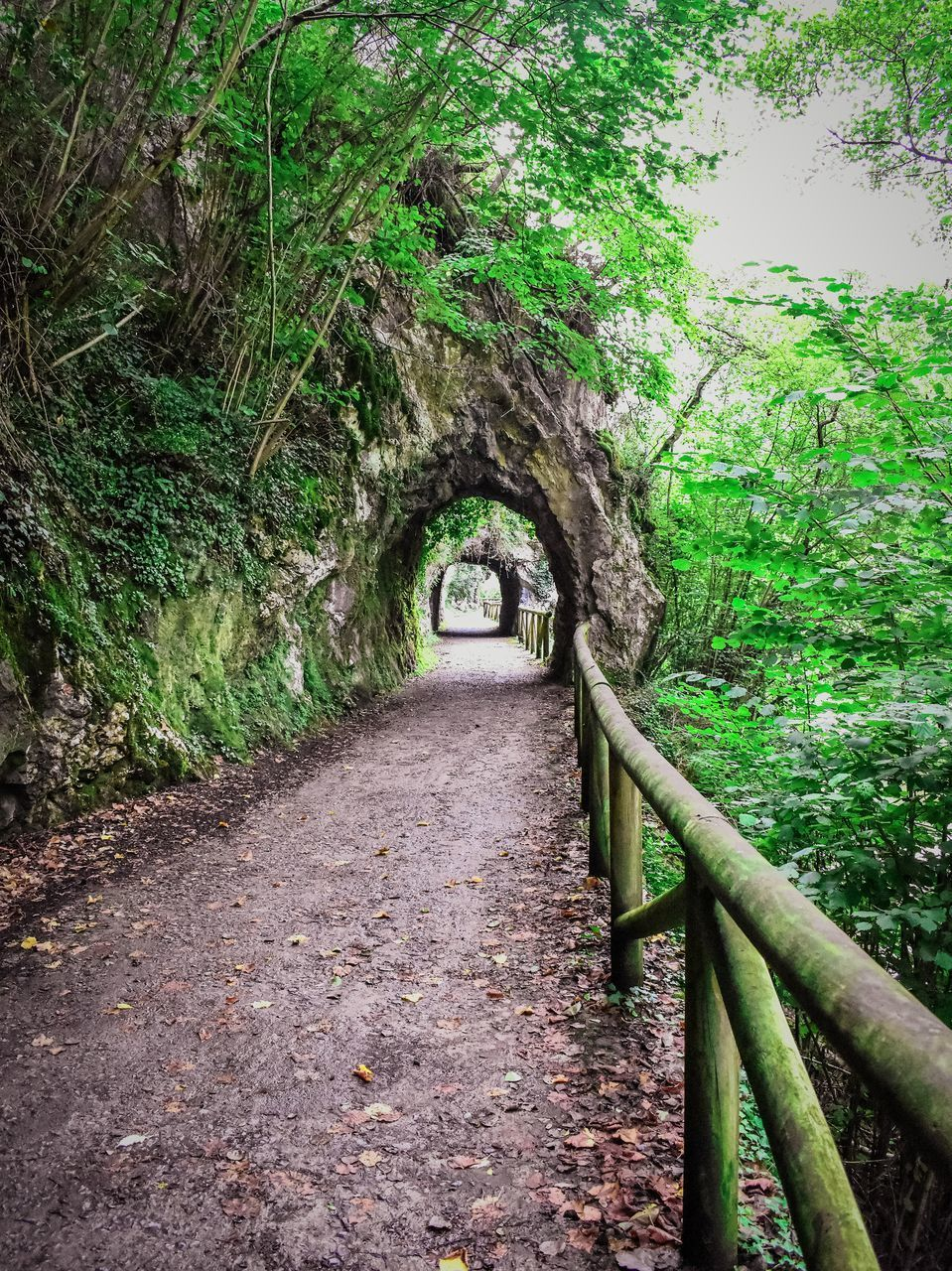 the way forward, tree, direction, plant, forest, growth, architecture, no people, nature, day, arch, green color, tranquility, connection, footpath, railing, land, diminishing perspective, bridge, beauty in nature, outdoors, long