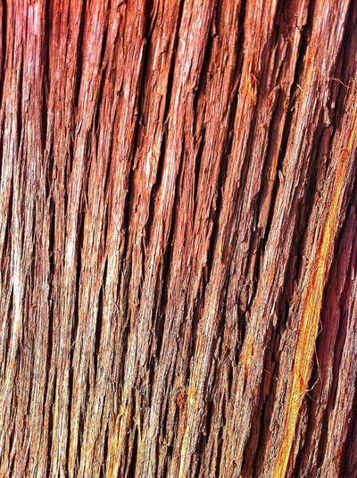 Nature Art Of Wood