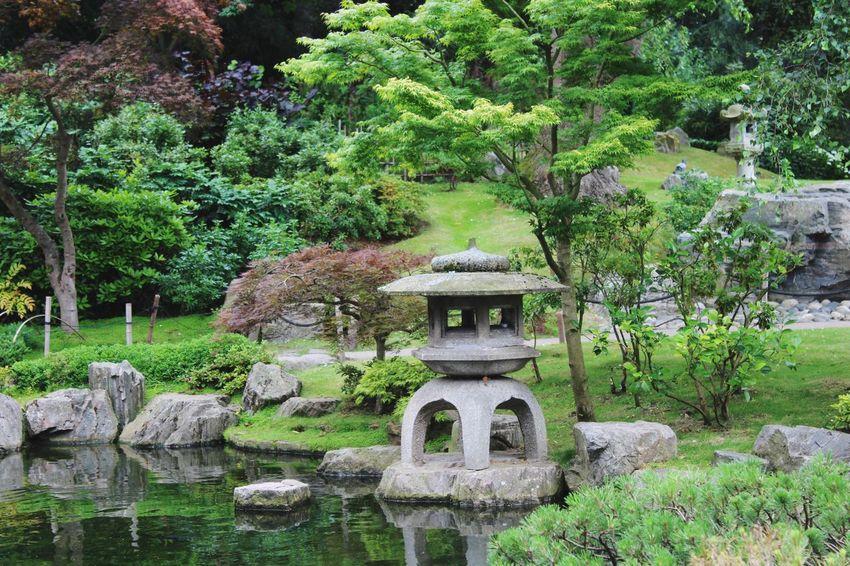 Tranquil Kyoto Garden. London Holland Park Kyoto Garden StoneLantern Nature Photography Green Trees Garden Park No People Holland Park, London LDN Tranquility Tranquil Scene