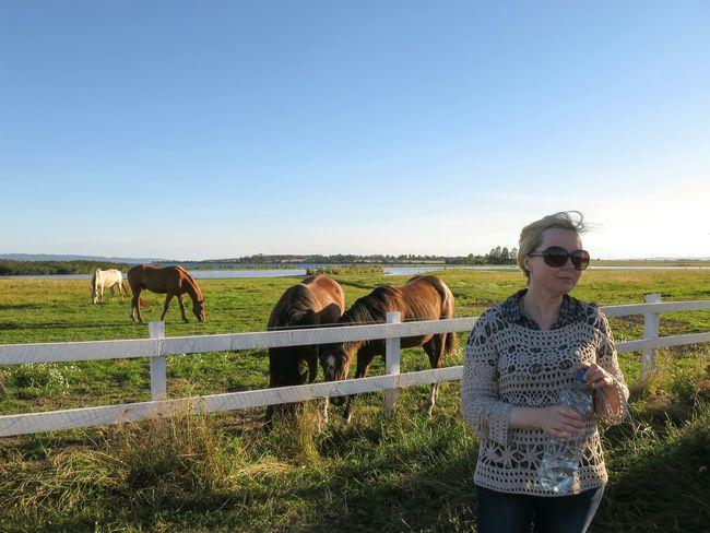 Break After 12 Km Cycling 👍 Portrait Landscape Horses Erstad