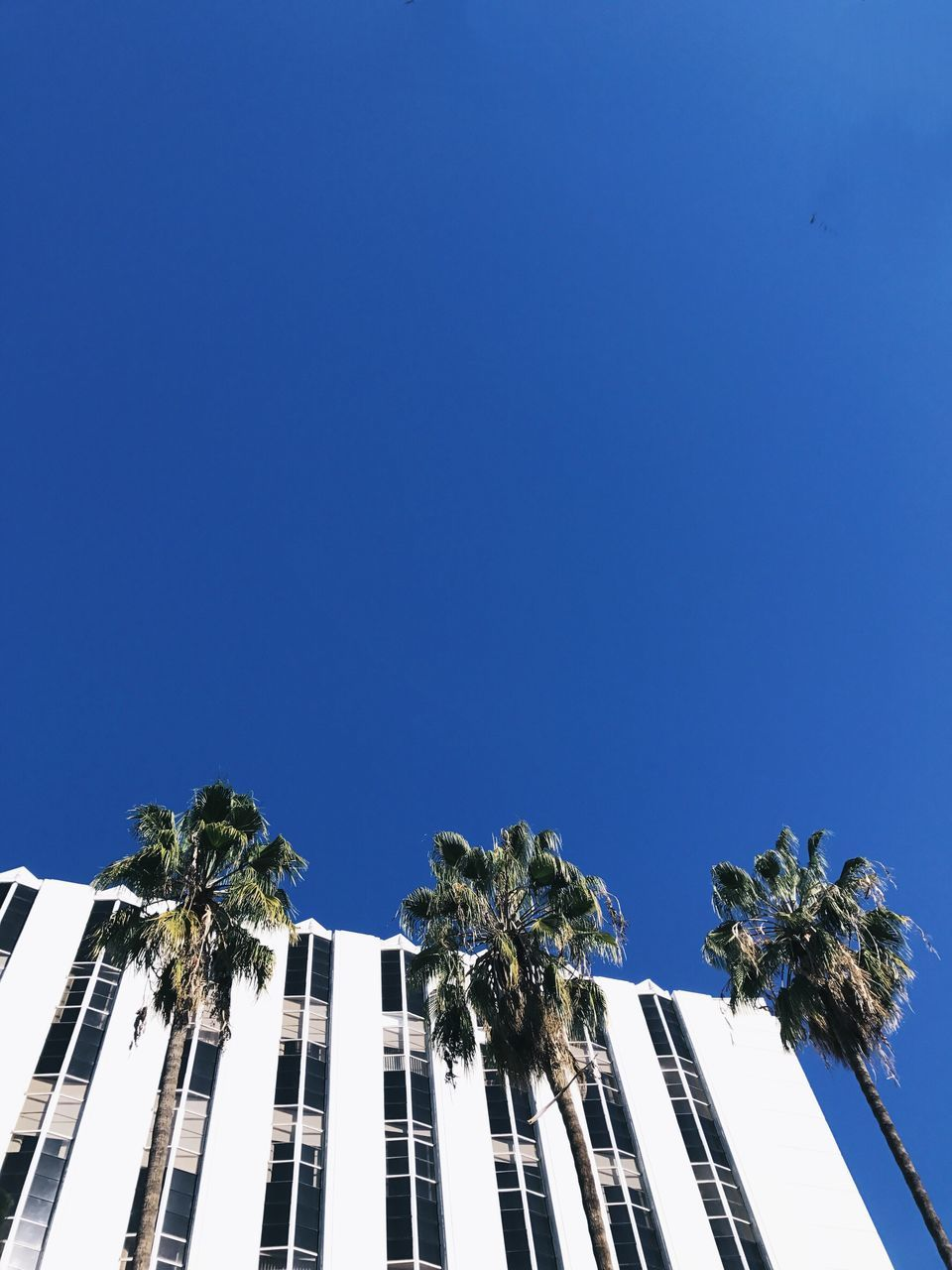 palm tree, low angle view, blue, tree, clear sky, copy space, day, architecture, built structure, no people, outdoors, growth, nature, building exterior, sky, beauty in nature