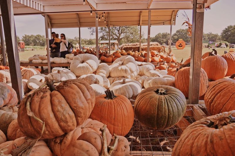 View of pumpkins for sale at market