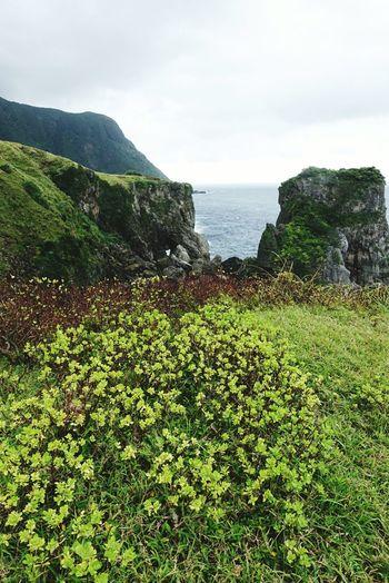 Plant Mountain Seaside Lanyu Taitung,taiwan