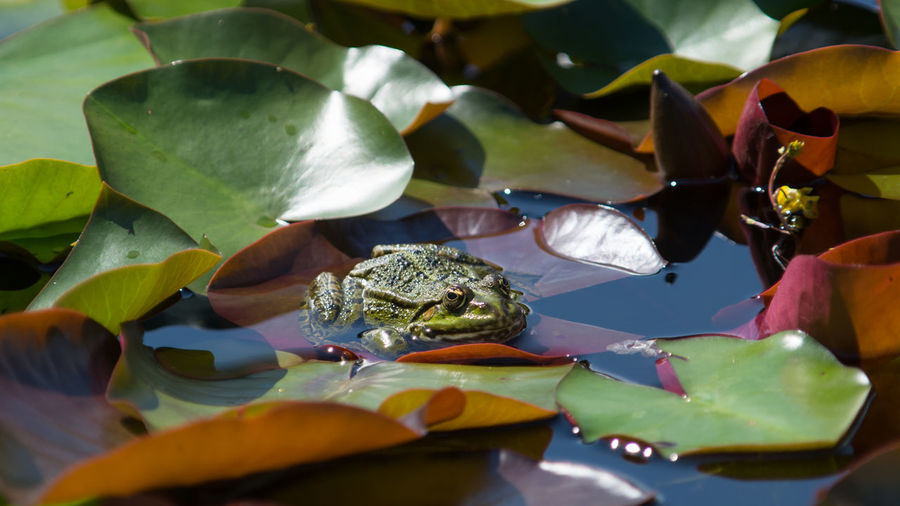 No People Animal Wildlife Day Multi Colored Water Close-up Outdoors Nature Animal Themes Freshness Outdoor Outdoors Photography Nikon D7200 Outdoor Photography Pet Portraits Beliebte Fotos Frosch