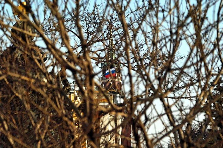 Bare Tree Branch Close-up Day Kremlin Entangled Low Angle View Moscow In March Nature No People Outdoors Russian Flag Sky Tree