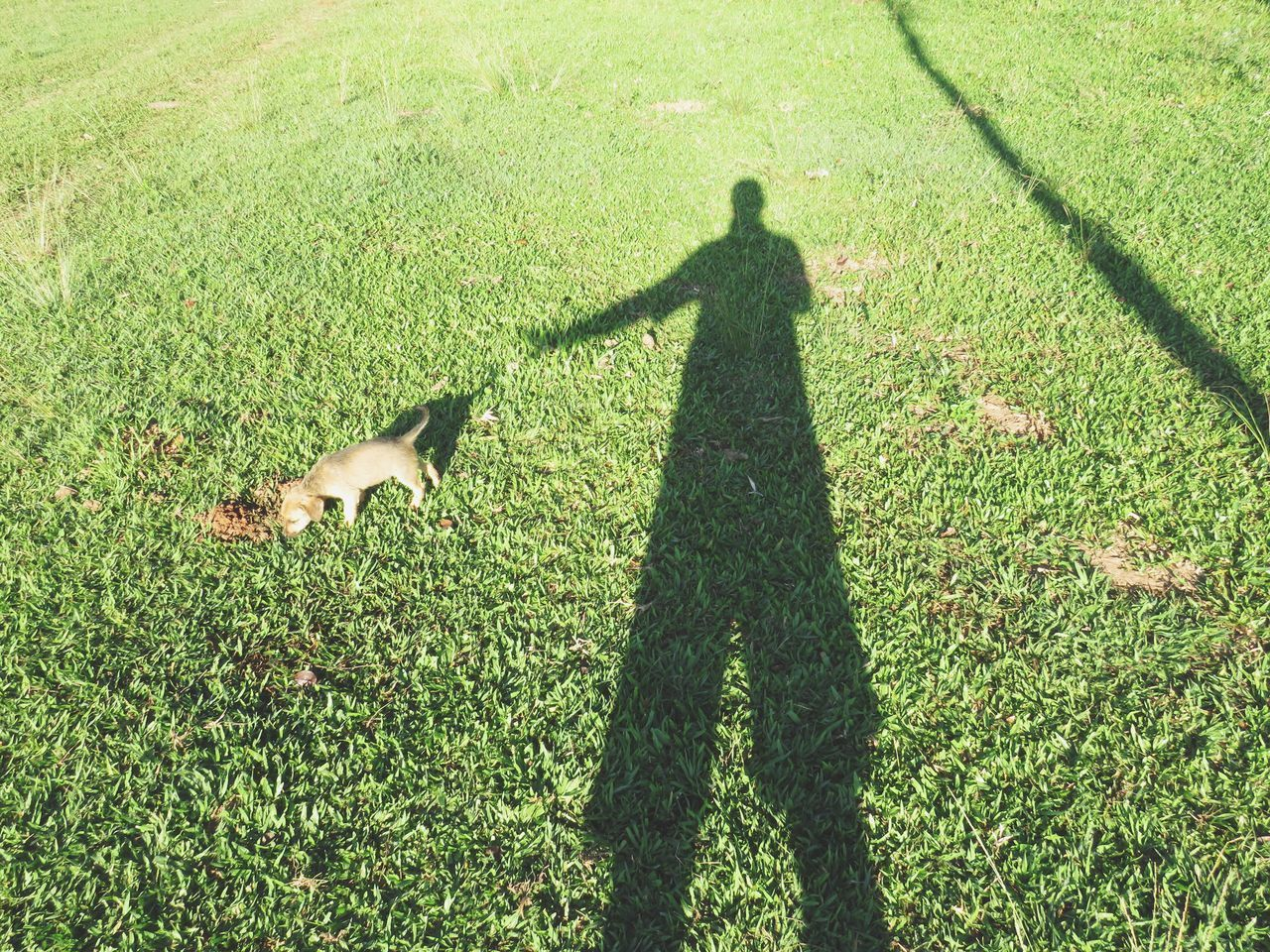 HIGH ANGLE VIEW OF MAN WITH DOG STANDING ON FIELD