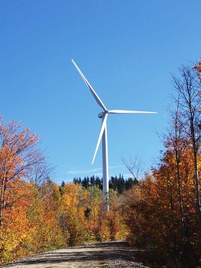 Windmill Wind Turbine Wind Power Technology Power In Nature Rural Scene Alternative Energy Tree Industry Fuel And Power Generation