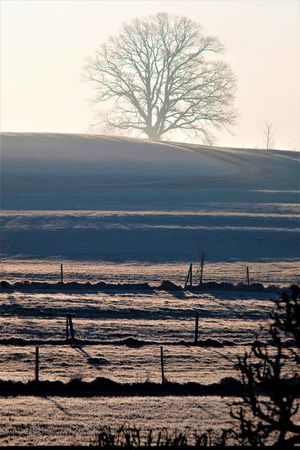 Sunrise just before a rebirthingly springtime In Light Light Rebirth End Of Winter Environment Hill Landscape No People Silhouette Sunrise Tree