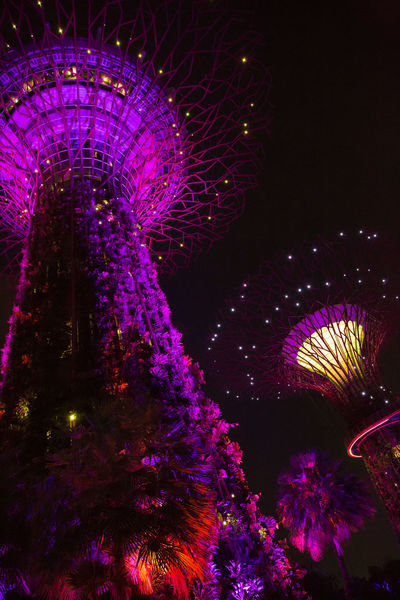 magic! Gardens By The Bay Magical Amusement Park Amusement Park Ride Architecture Arts Culture And Entertainment Built Structure Celebration Decoration Glowing Illuminated Light Lighting Equipment Low Angle View Motion Nature Night No People Outdoors Purple Sky Travel Destinations
