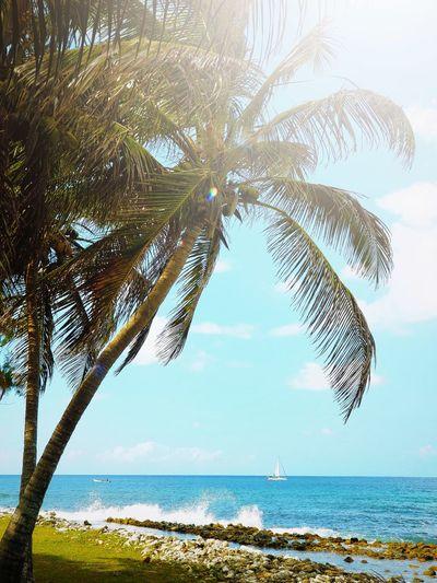 Tree Water Sea