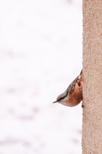 Close-up of a bird on snow