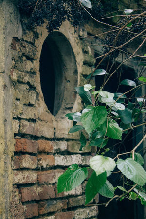 Architecture Brick Wall Built Structure Close-up Day Growth Leaf Nature No People Outdoors Plant Tree