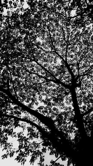 OvER..ThinKinG...iS..A...SPeCiaL...FoRm..oF....FeaR... Tree_collection  TreePorn Tree And Branches Natural Pattern Fine Art Photography Photography Is My Escape From Reality! Black And White Photography Black And White Collection  Life's Simple Pleasures... Life Is A Journey Unknown Journey ....... My World Monochrome Photography