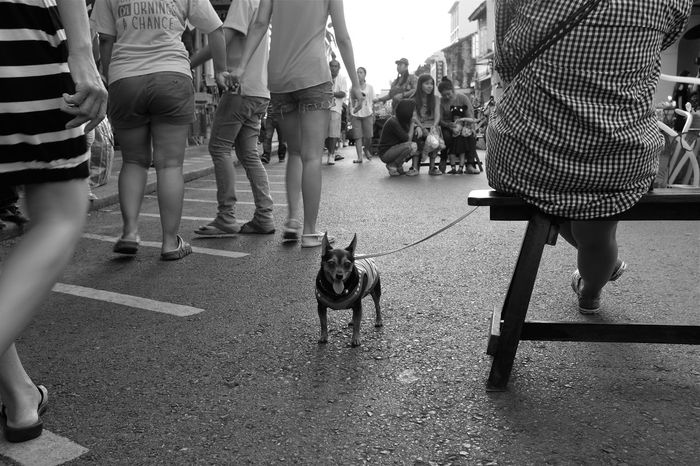 hi there ! putting together a phuket photo essay. stay tuned ;-) B&w Street Photography Black And White Black Dogs Rule Casual Clothing City City Life Dog Domestic Animals Group Of People Leaf Leisure Activity Lifestyles Low Angle View Monochrome One Animal Phuket Phuket,Thailand Short Dog Small Dog Street Summer Time  Togetherness Tourism Walking Weather The Street Photographer - 2017 EyeEm Awards