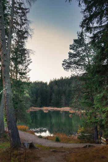 Lake Mösern in Fall. Tree Plant Tranquility Forest Tranquil Scene Beauty In Nature Sky Scenics - Nature Water Land Growth Non-urban Scene Nature No People Lake Day Environment WoodLand Outdoors Pine Tree Coniferous Tree