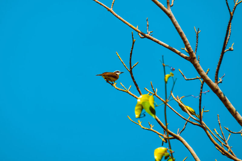 Bird in the branches Animal Themes Animal Wildlife Animals In The Wild Beauty In Nature Bird Blue Branch Clear Sky Day Leaf Low Angle View Nature No People One Animal Outdoors Perching Tree Yellow Sommergefühle
