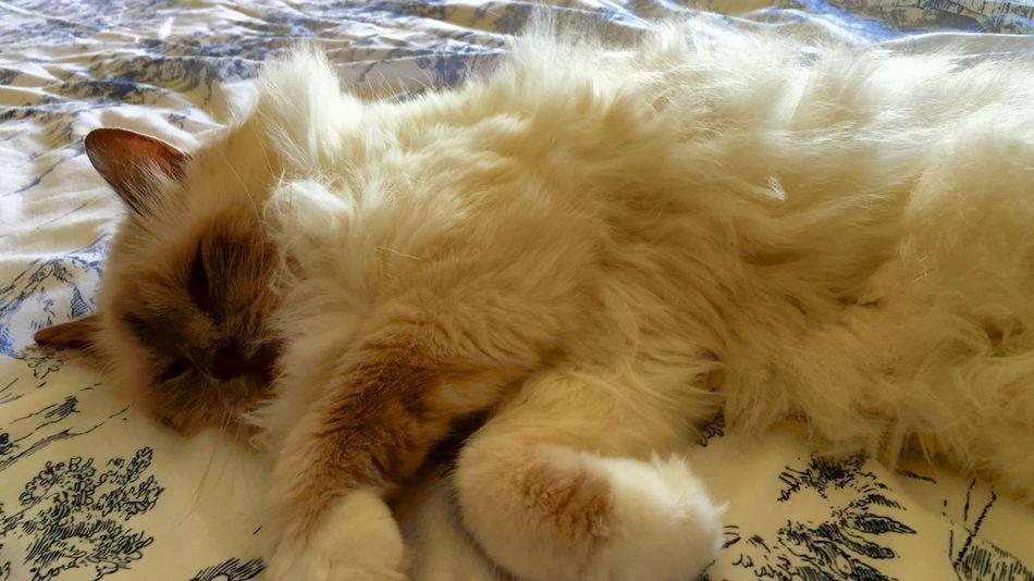 Cat sleepin
