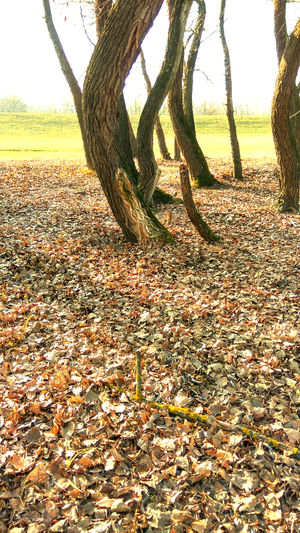 Autumn In The Nature Beautiful Nature Beutiful Day Golden Lighting Autumn Scene Golden Lights Greens Nature Outdoors