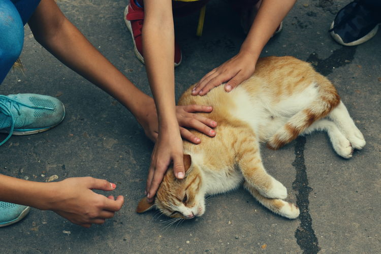 High angle view of hands and cat on city