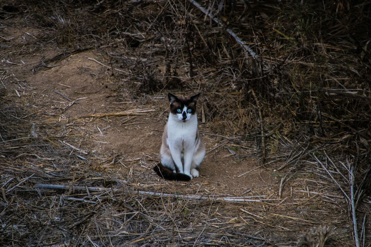 Portrait of a cat sitting on ground