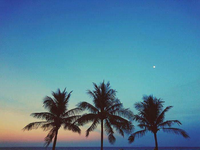 Palm Tree Blue Tree Clear Sky No People Sunset Silhouette Vietnam Danang Danang, Vietnam Colours Colours Of Nature