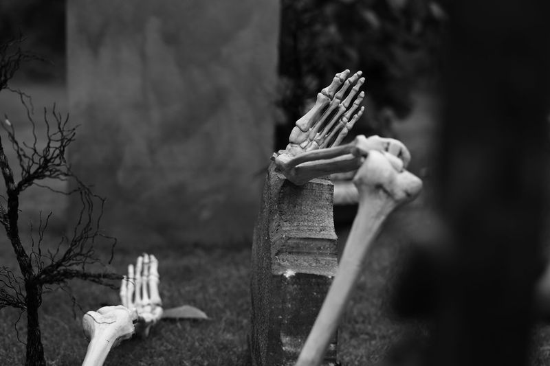 Skeleton in backyard during halloween