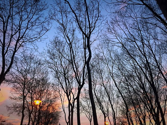 Buenos días y buen inicio de semana!!😊 Tree Bare Tree Nature Sunset Branch Low Angle View Beauty In Nature Sky Outdoors No People Scenics Tree Trunk Tranquility Silhouette Growth Forest Fire Day