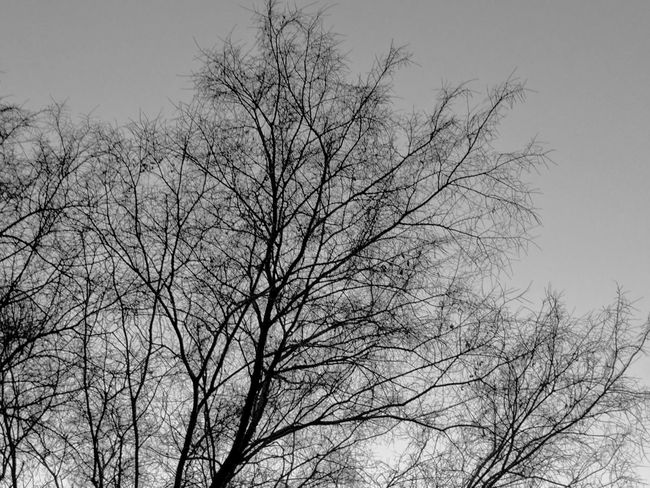 because it reminds me of black corals Tree Beauty In Nature Nature Bare Tree Mobile Photography There Be Dragons Tree Silhouette Tree And Sky EyeEm Nature Lover Outdoor Photography Black & White Gray Sky Feeling Blue My Year My View No People Outdoors Treetop Taking Photos EyeEm Gallery Beauty In Nature Eyeem Tree TreePorn Tree_collection  Bnwphotography Bnw