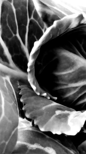 Abstract Photography Abstract Art Black And White Photography Shapes In Nature  Curves Of Nature