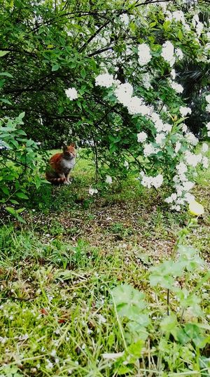 Thecat Yellowcat White Flowers Green Green Leaves Taking Photos Enjoying Life Hello World