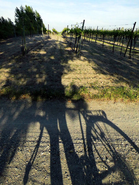 Wine Moments For My Friends 😍😘🎁 ShadowSelfie Shadows & Lights Austriaholidays May 2016 Tranquility Beauty In Nature Perfect Day With A Friend Colors Of Nature Vine Austriaholidays Colors Of Life Natural Beauty Sunny Day 🌞 Naturelovers