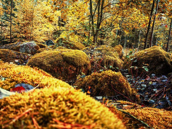 Moss stones in