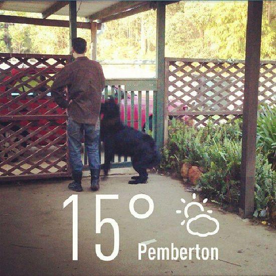Frlendly Dog ... Pemberton