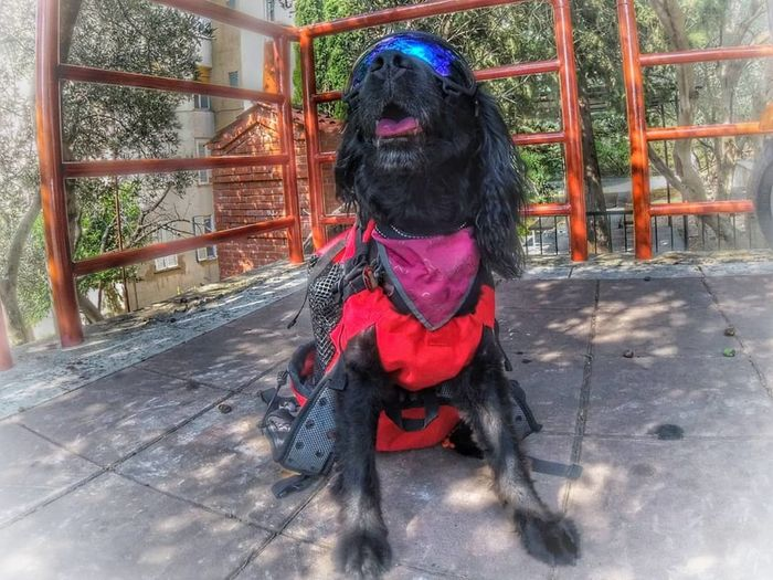 Transportation System Way Of Transport Travel Doggles Dog Backpack EyeEm Nature Lover Day Mammal One Animal Architecture No People Outdoors Sitting Domestic Canine Pets Glass - Material Domestic Animals Dog Front View