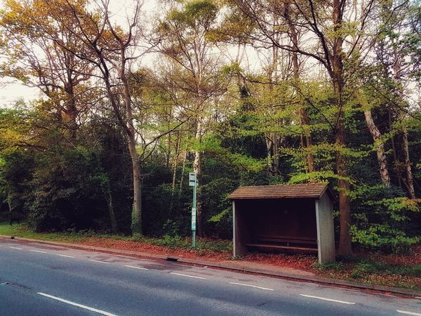 Deserted English bus-stop on a country road - 26 April 2017 - Egham, England Samsung Galaxy S7 Nature Taking Photos Spring2017 Egham Sky Trees Wood WoodLand Bus Stop Busstop England Countryside Country Road Countryside Uk