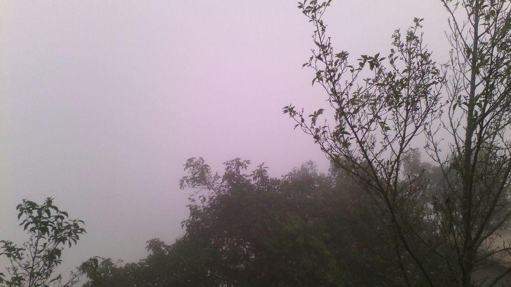 Llego la Neblina Nebline ... Oaxaca México