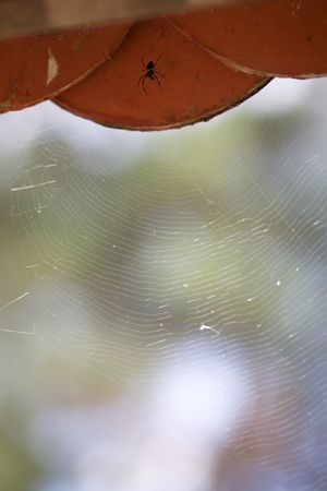 spider and its web Animal Themes Animal Wildlife Animals In The Wild Beauty In Nature Close-up Day Focus On Foreground Insect Nature No People One Animal Outdoors Spider Spider Web This Is Latin America