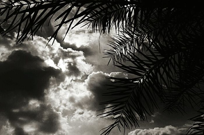 Blackandwhite Photography Through The Trees Clouds And Sky Blackandwhite Cloudscape Sun Behind Clouds Hot Weather Summer2016 Save Trees Nature Plant A Tree Nature Photography Nature_collection Get Outdoors Outside Save Nature  Sunny Day Indianphotographer Eyeemphoto Summertime India Get Outside My Point Of View Yea Trees And Sky