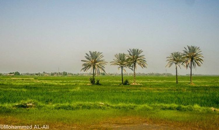 Sony Rx100 Sonyrx100 Landscape Karbalaa Palms Iraq