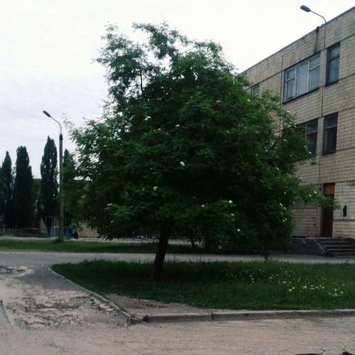 дерево Весна💐🌷🌿 зелень